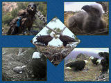 pictures of eaglets from 2007
